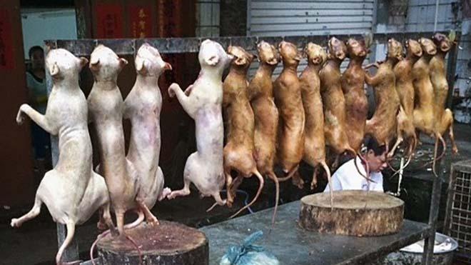 وباء كوڤيد-19 يلقي بظله الثقيل على مهرجان لحوم الكلاب في الصين