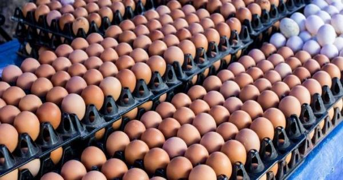 اولمبياد 2018: النرويج تحصل على 15 الف بيضة بدلا من 1500 بسبب خطأ